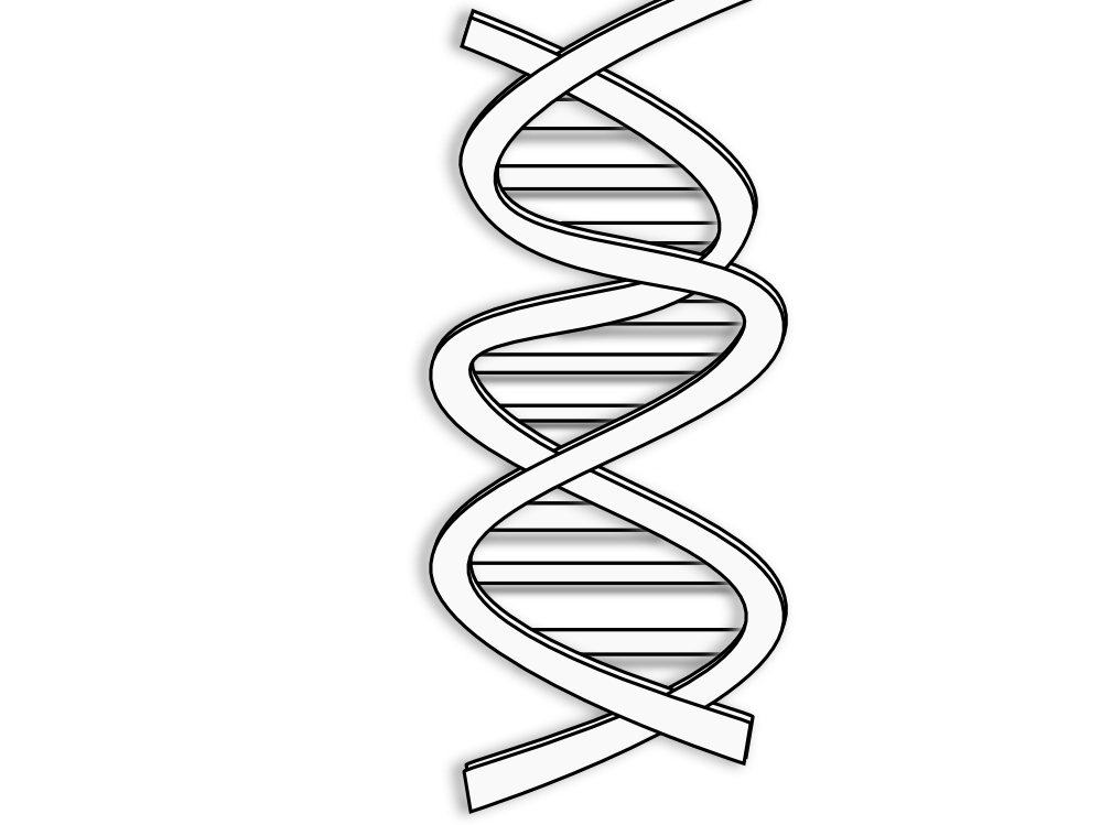 Transparent dna royalty free. Clipart download on cognigen