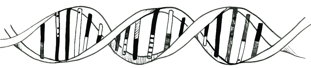 Transparent dna tumblr. Collection of drawing