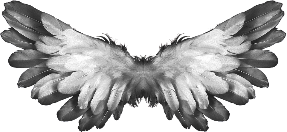 Transparent feathers broken wing. Free image on pixabay