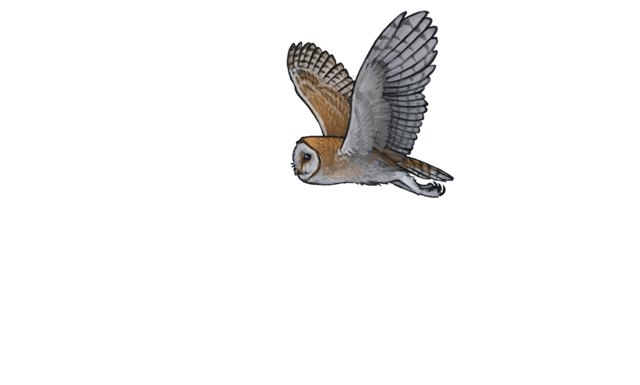 Transparent feathers owl. Encounter guide lioden barnowlnightpng