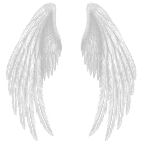 Transparent feathers photography tumblr. Prop png