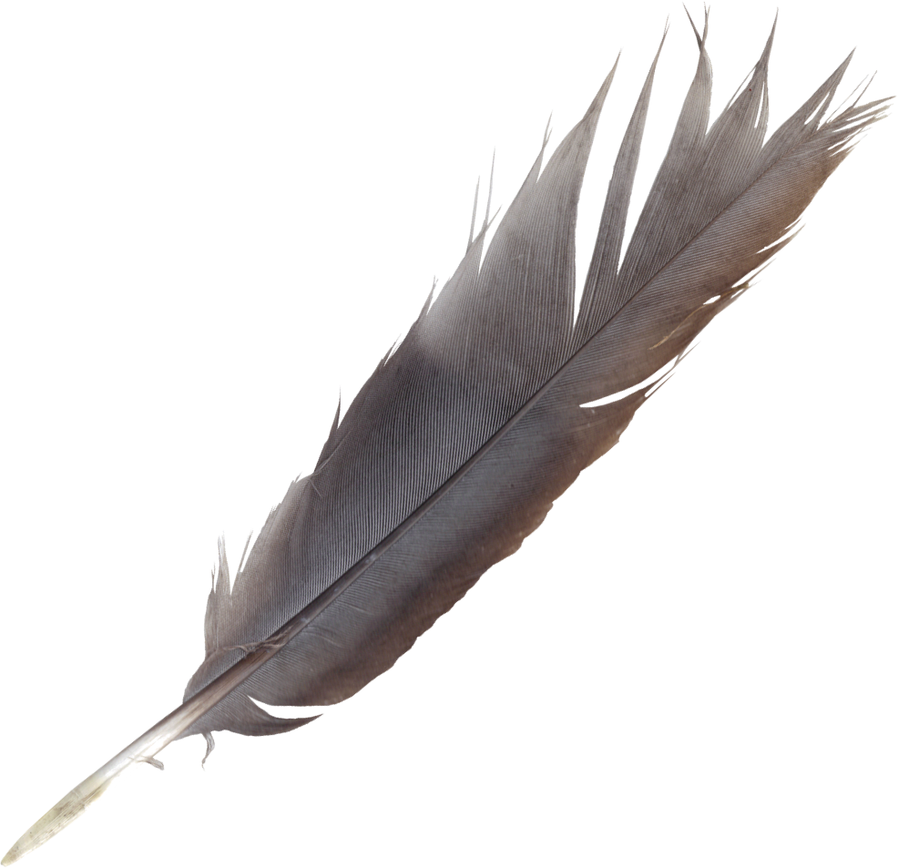 Transparent feathers quill. Collection of free feather