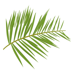 Transparent fern. Png or svg to