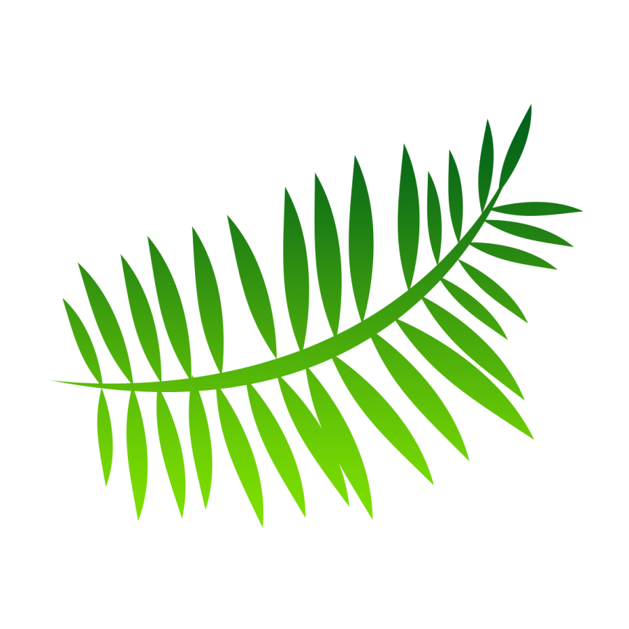 Transparent fern plant leaves. Vector png image background