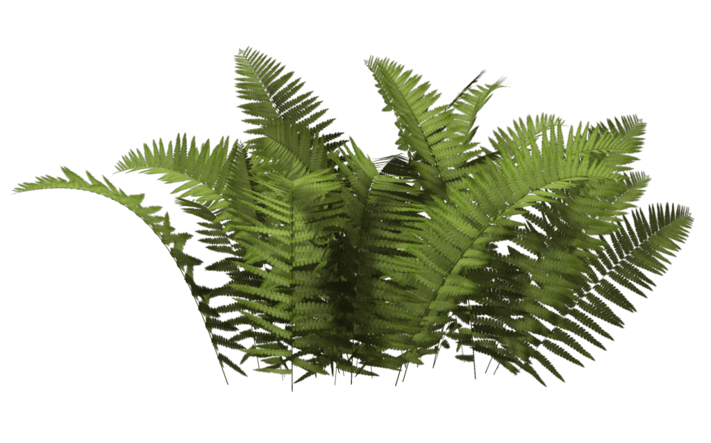 Transparent fern background. Ferns bush png stickpng
