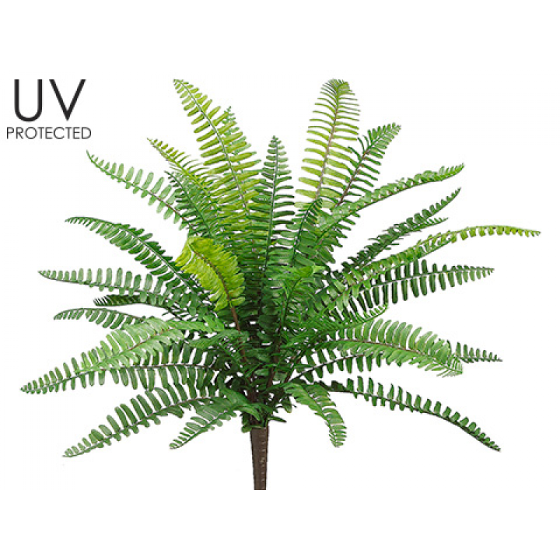 inch uv protected. Transparent fern bush clip art black and white download