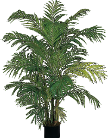 Transparent fern potted. Clipart