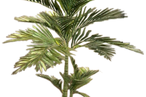 Transparent fern potted. Png image related wallpapers