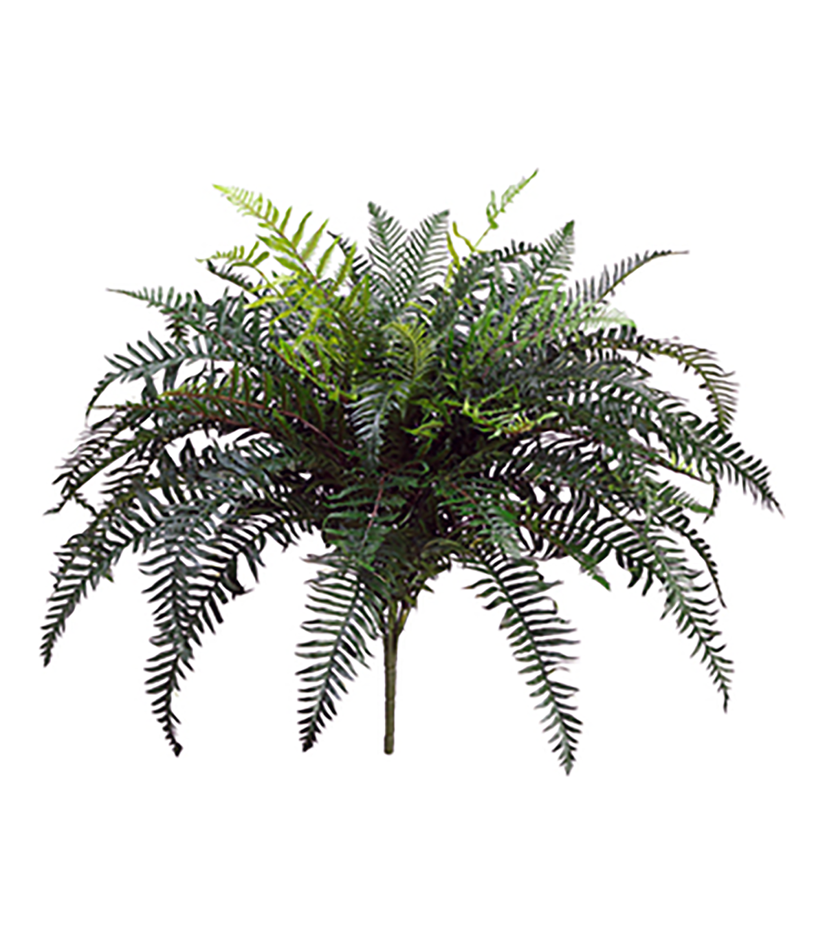 On sale now river. Transparent fern bush png library