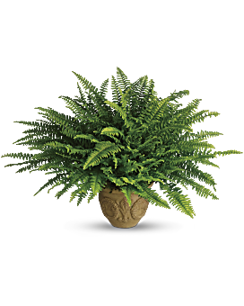 Transparent fern potted. Teleflora s heartwarming thoughts