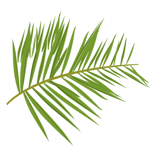 Transparent fern vector. Green png svg