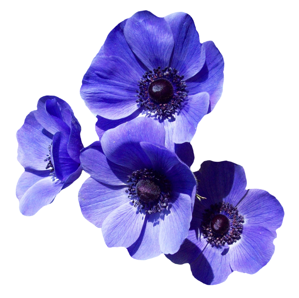 Free purple flower image. Transparent flowers png clipart library stock