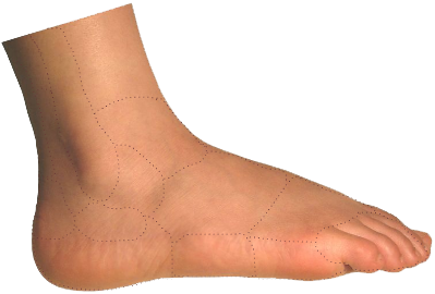 Transparent foot painful. Pain identifier advanced footcare