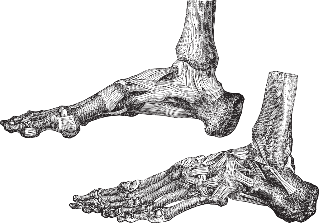 Drawing leg foot. Deeper farther higher by