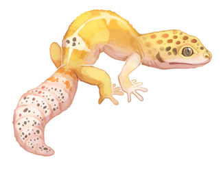 Transparent gecko spotted. Nerd by why so