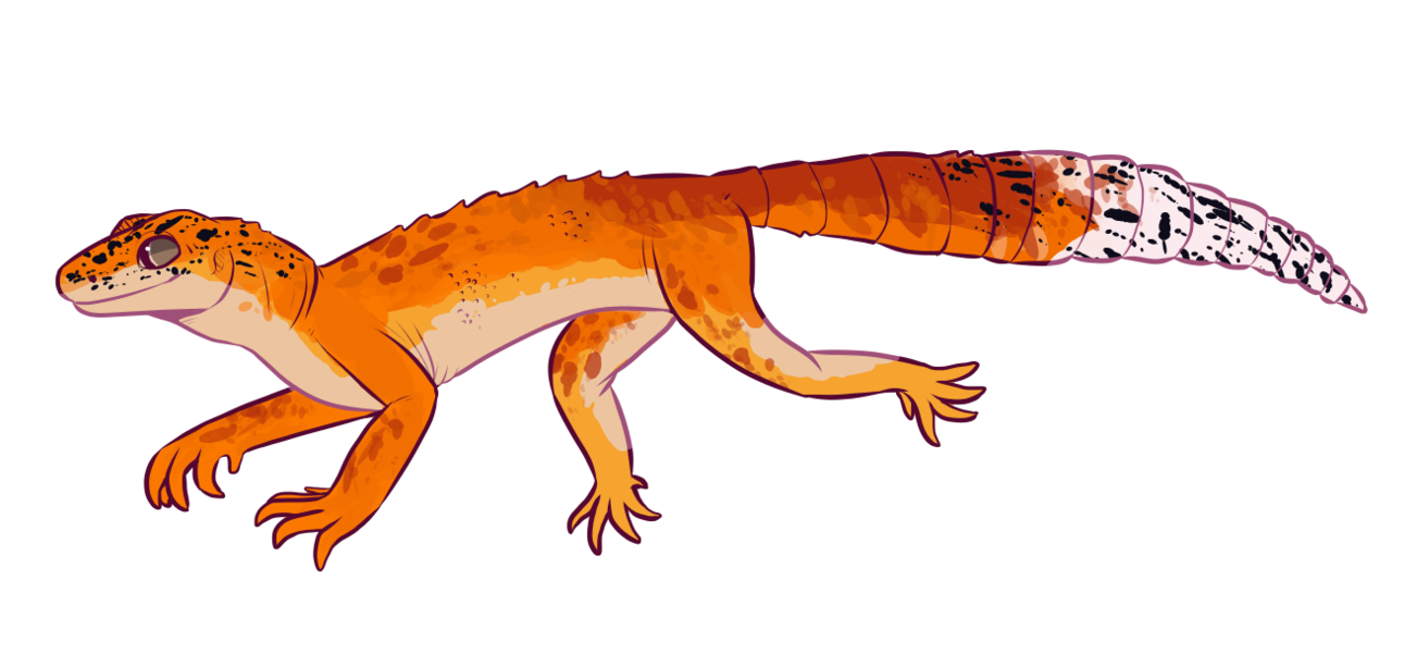 Transparent gecko spotted. Greater leopard by swilwolf