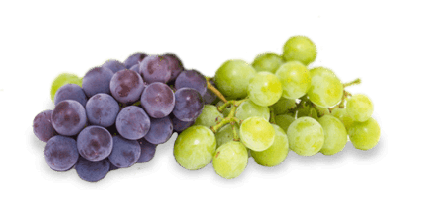 Png free images toppng. Transparent grapes high quality picture freeuse library