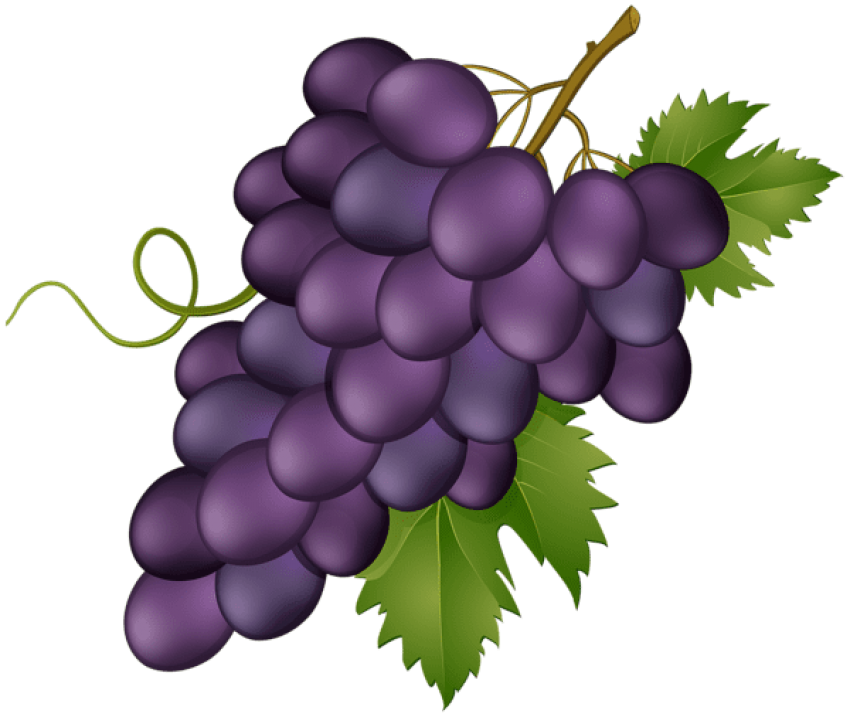 Grape pink png free. Transparent grapes high quality clip free library
