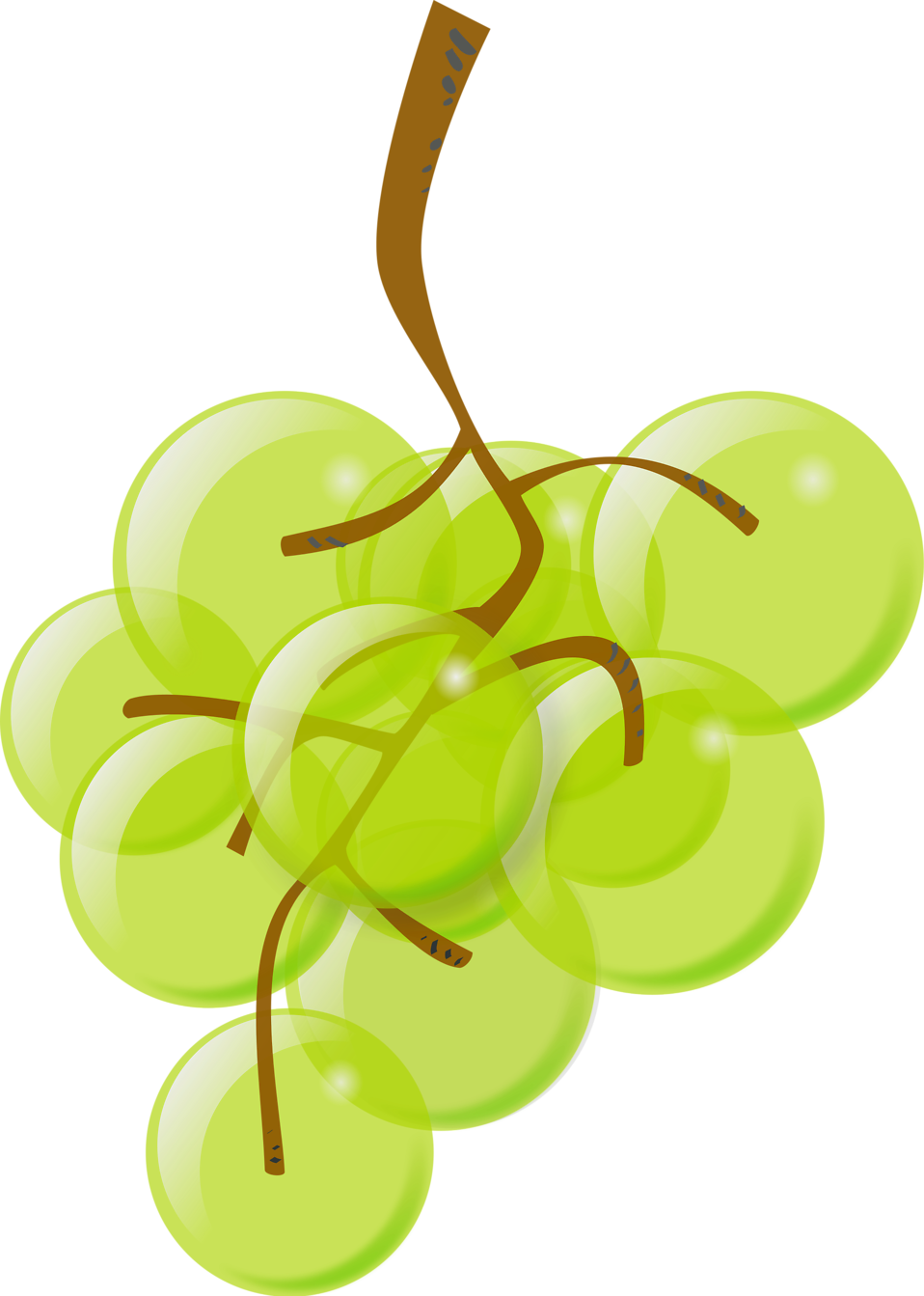 Transparent grapes illustration. Free stock photo of