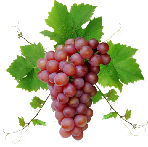 Transparent grapes isolated. Grape one stock photo