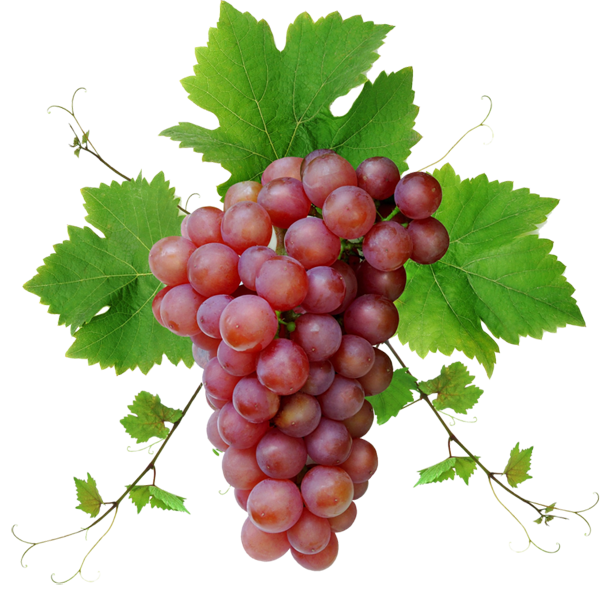 Transparent grapes one. Grape isolated stock photo