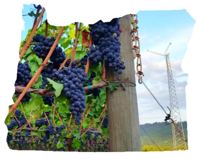 Transparent grapes oregon. S biennial energy report