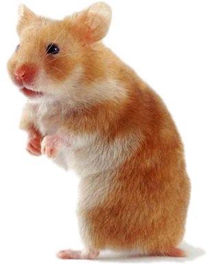 Transparent hamster. Pet care since they