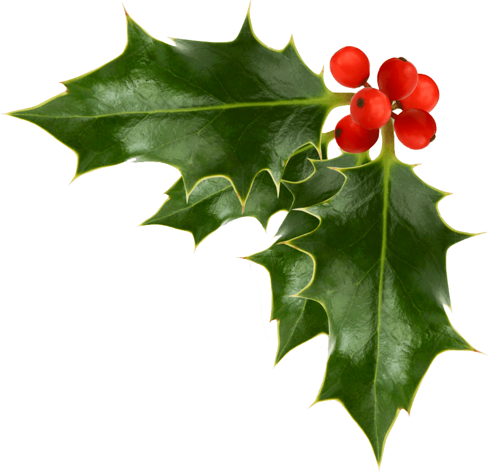 Transparent holly holiday. The war on christmas