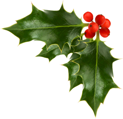 Holly clipart holly plant. Christmas psd real jobs