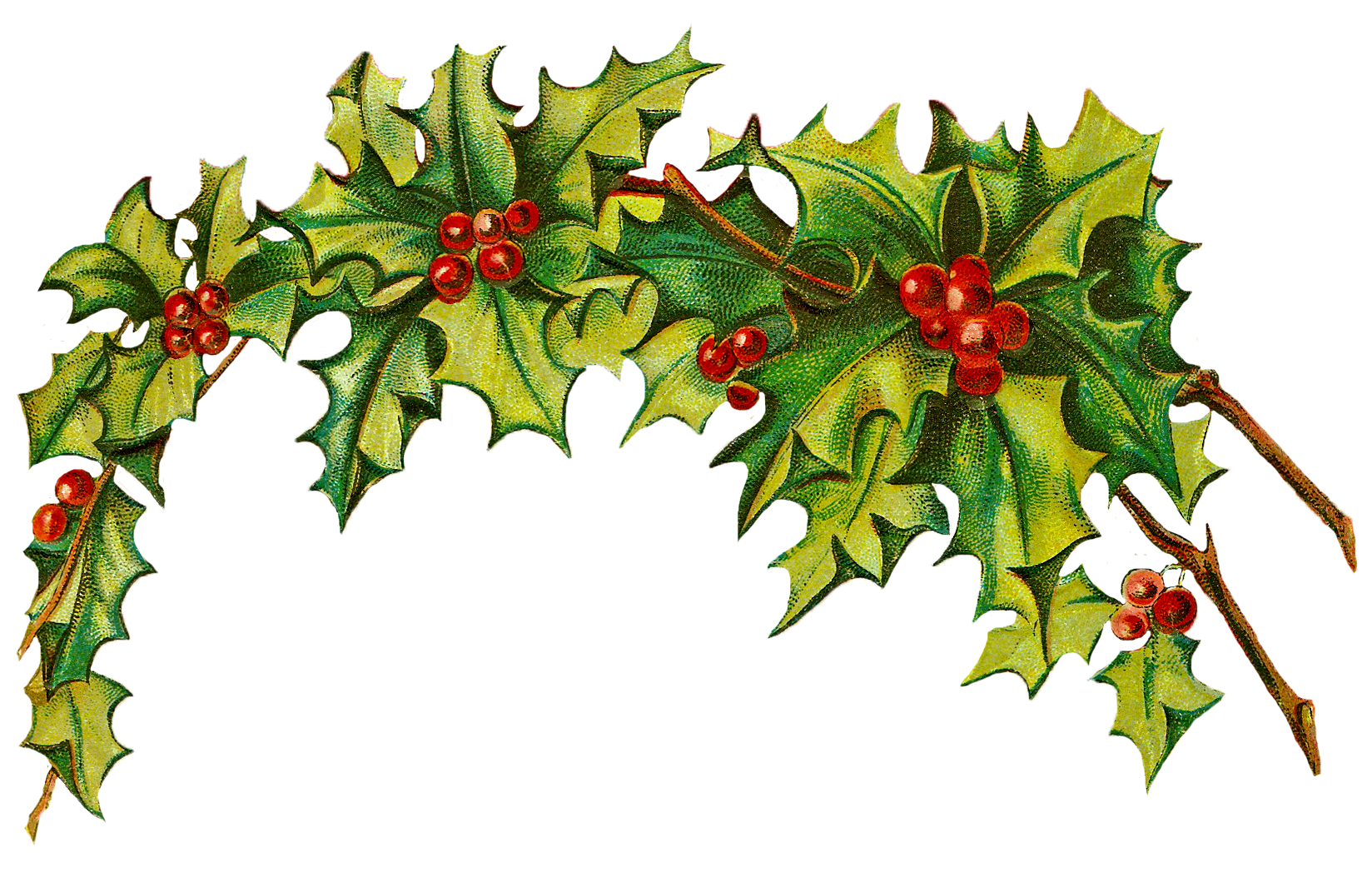 Transparent holly victorian. Clipart at getdrawings com