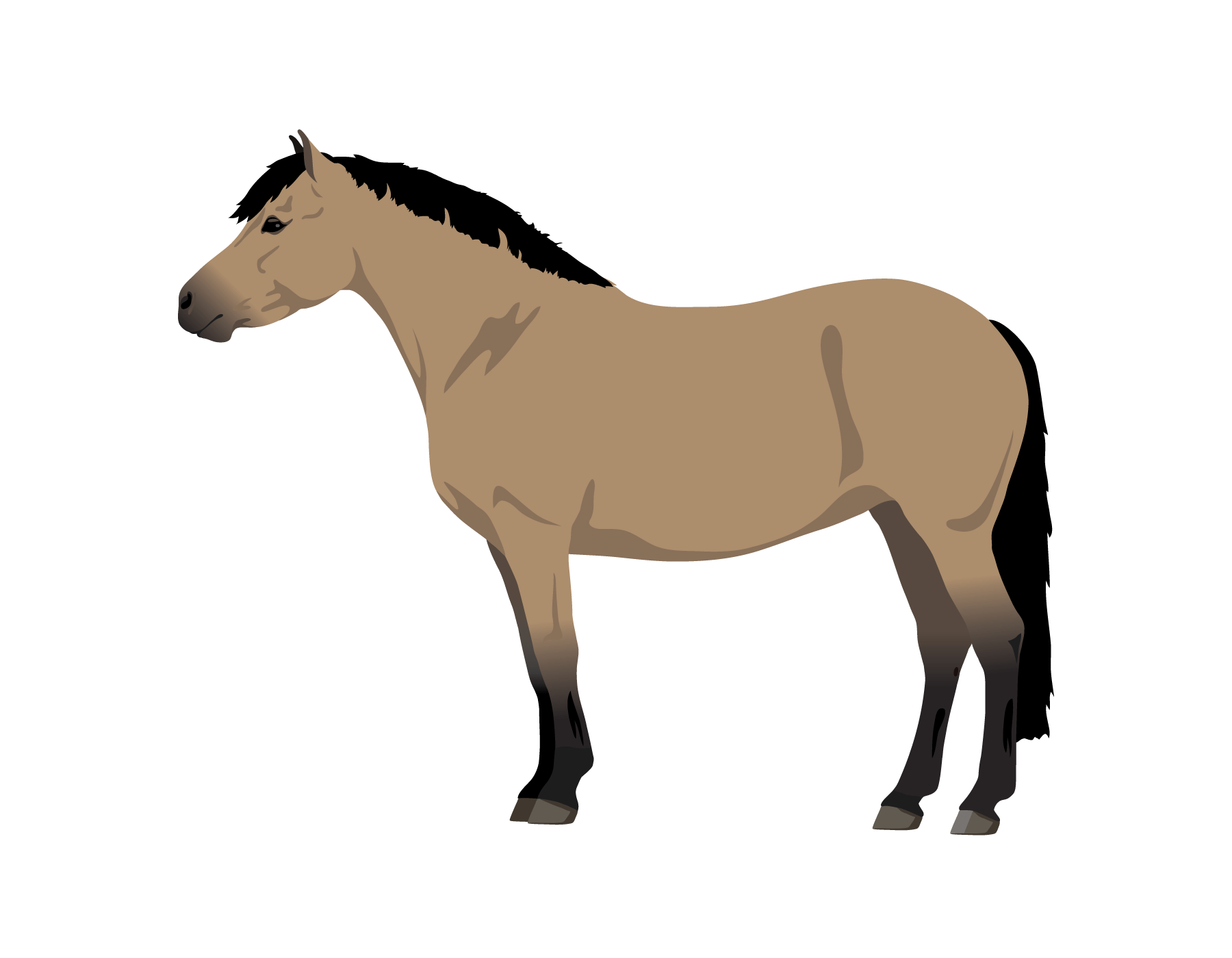 Transparent horses blue roan. Learn about horse pony