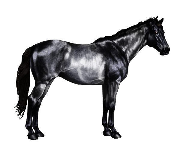 Transparent horses blue roan. Wickerequine horse patterns or