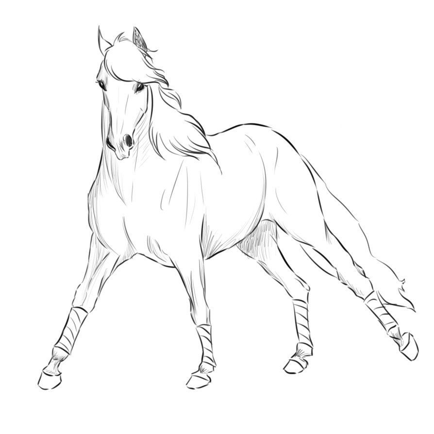 Transparent horses drawn. Andalusian lines by citruscoffins