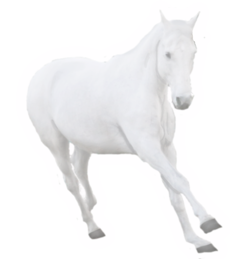 transparent horses ghost