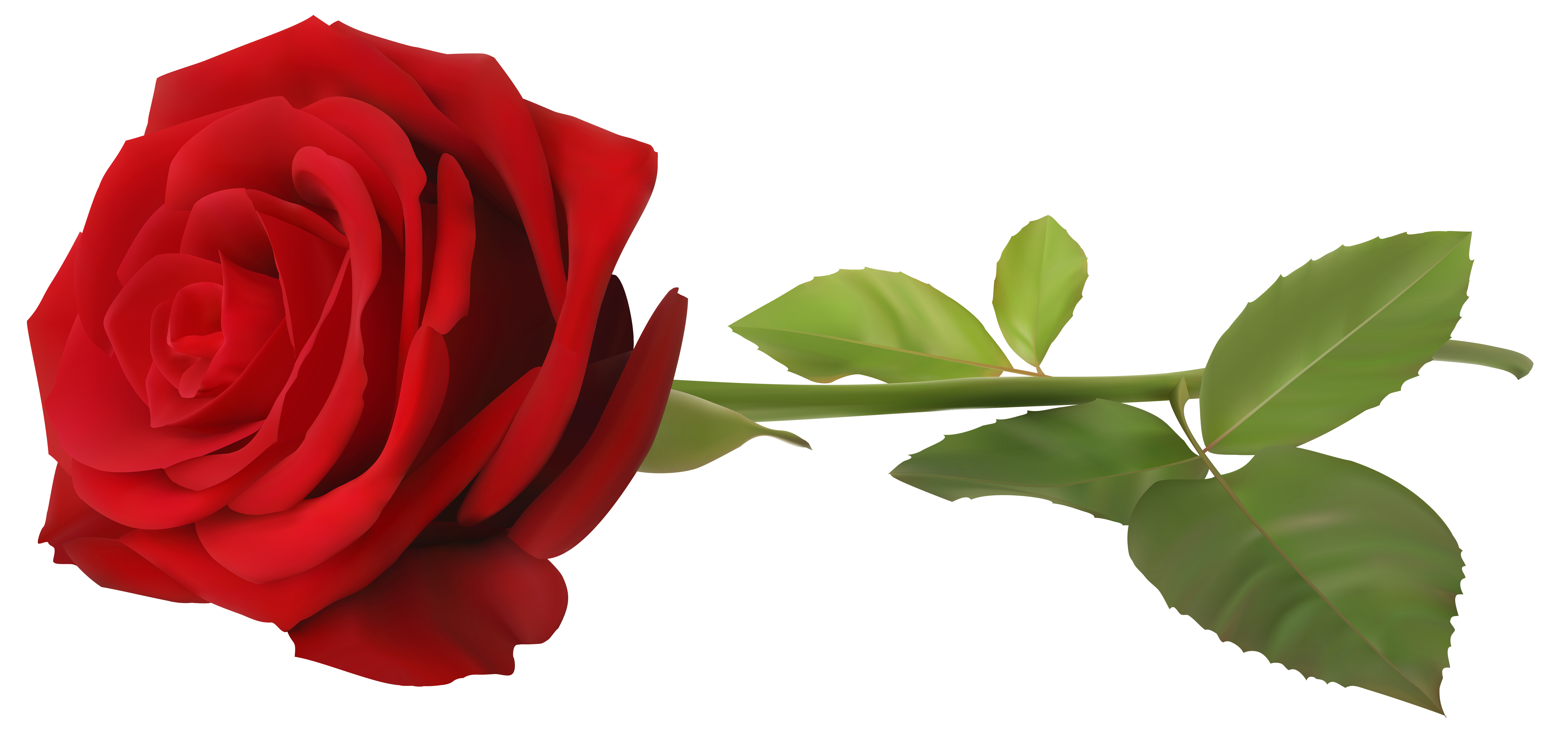 Rose transparent png. Red with stem clip