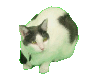 Chrome key example the. Transparent jpeg cat library