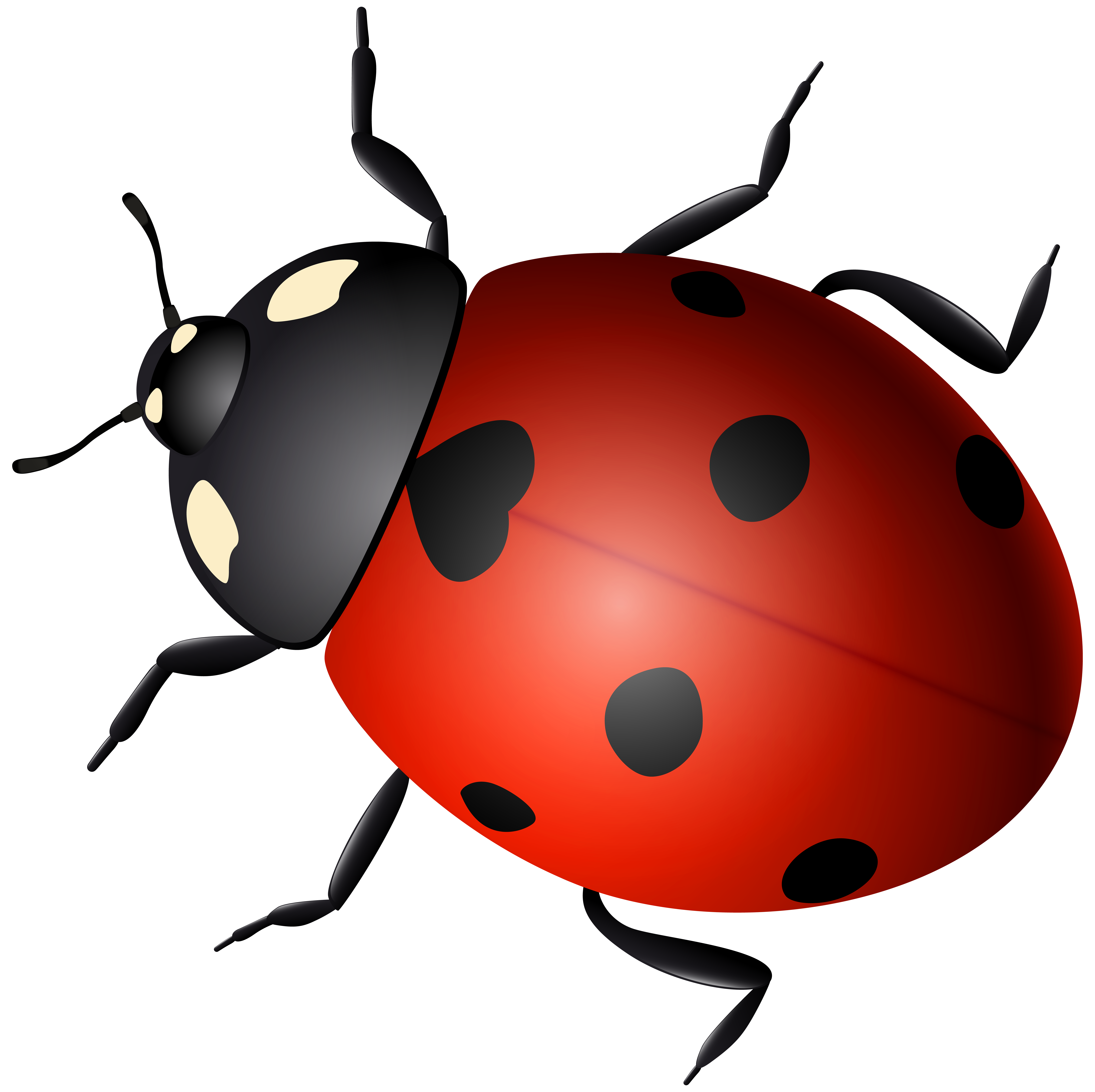 Decorative image gallery yopriceville. Transparent ladybug banner black and white library