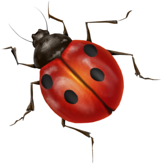 Transparent ladybug insect. Png image purepng free