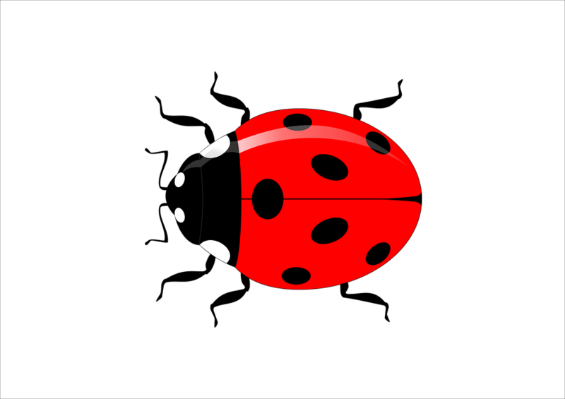Download free png red. Transparent ladybug leaf clipart royalty free stock