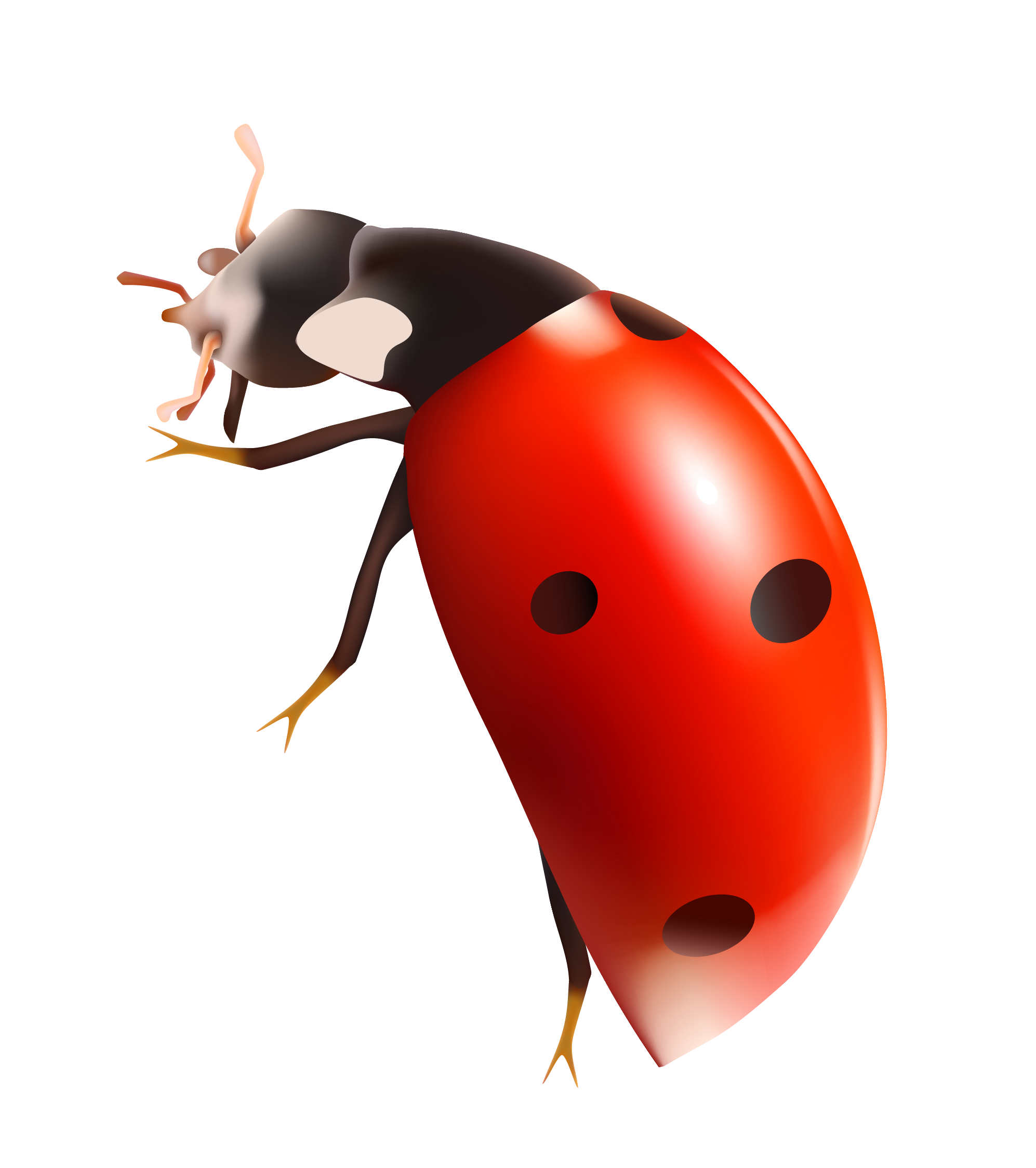 Transparent ladybug lucky. Ladybugs png images all