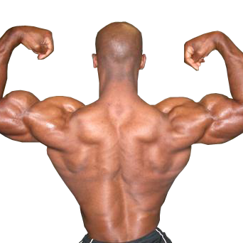 Transparent muscles back. I have a muscular