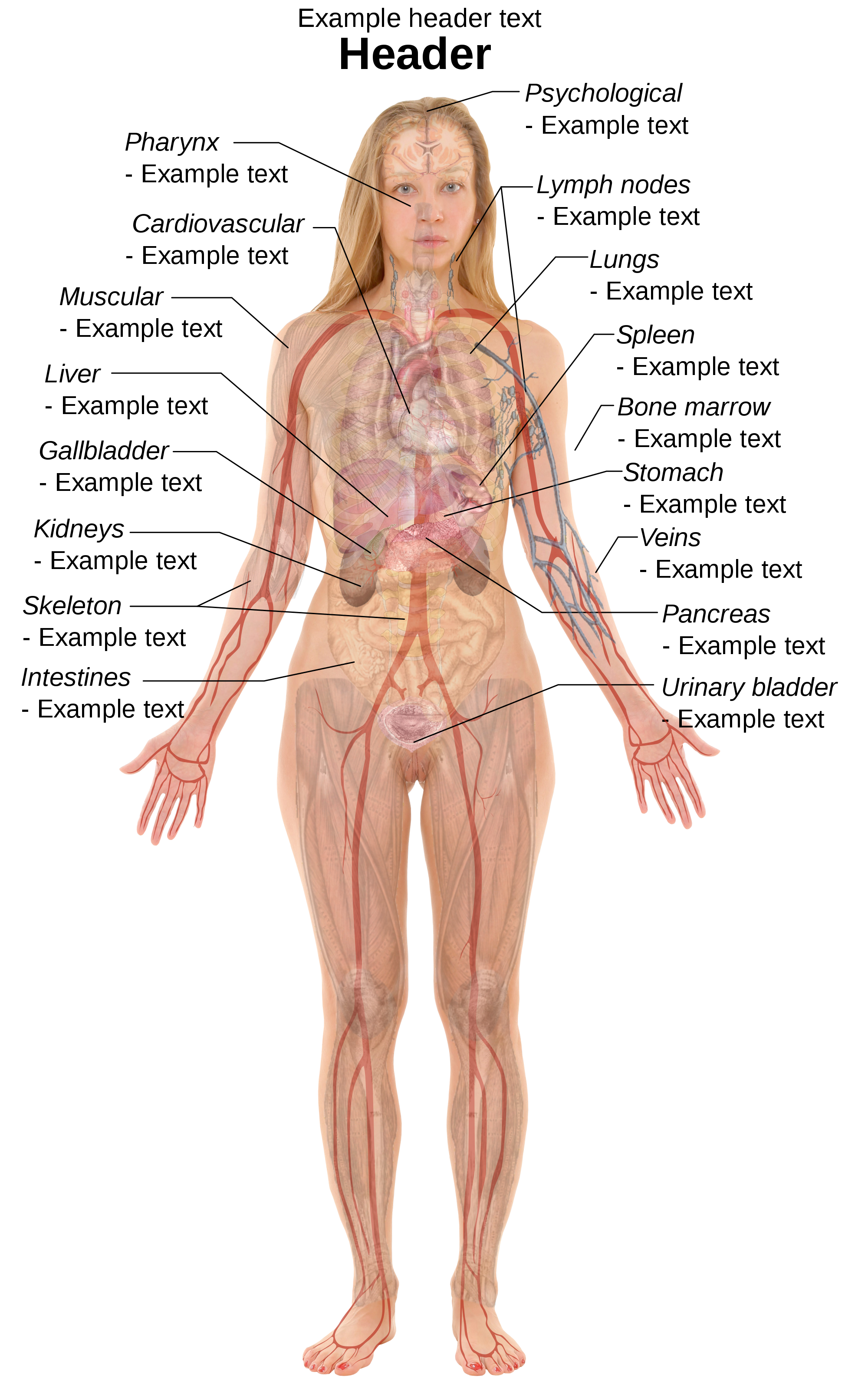 19 Transparent Muscles Body Diagram For Free Download On Ya Webdesign
