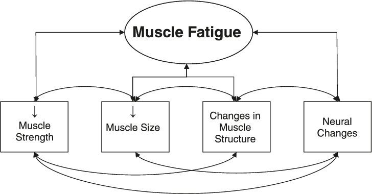 Transparent muscles fatigued. Components of neuromuscular function
