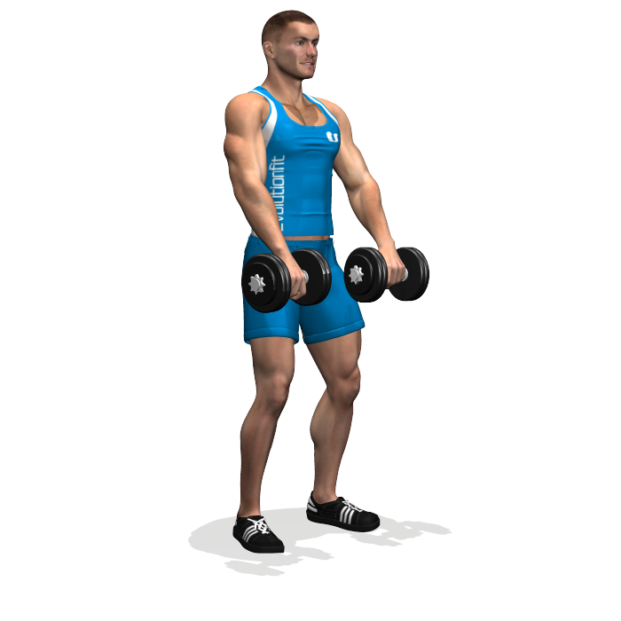 Transparent muscles gym. Front dumbbell raise involved