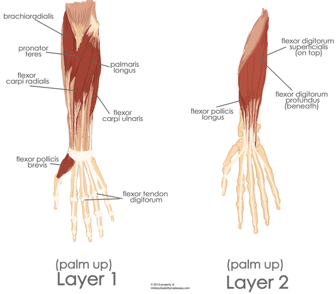 Transparent muscles hand. Military disability ratings for