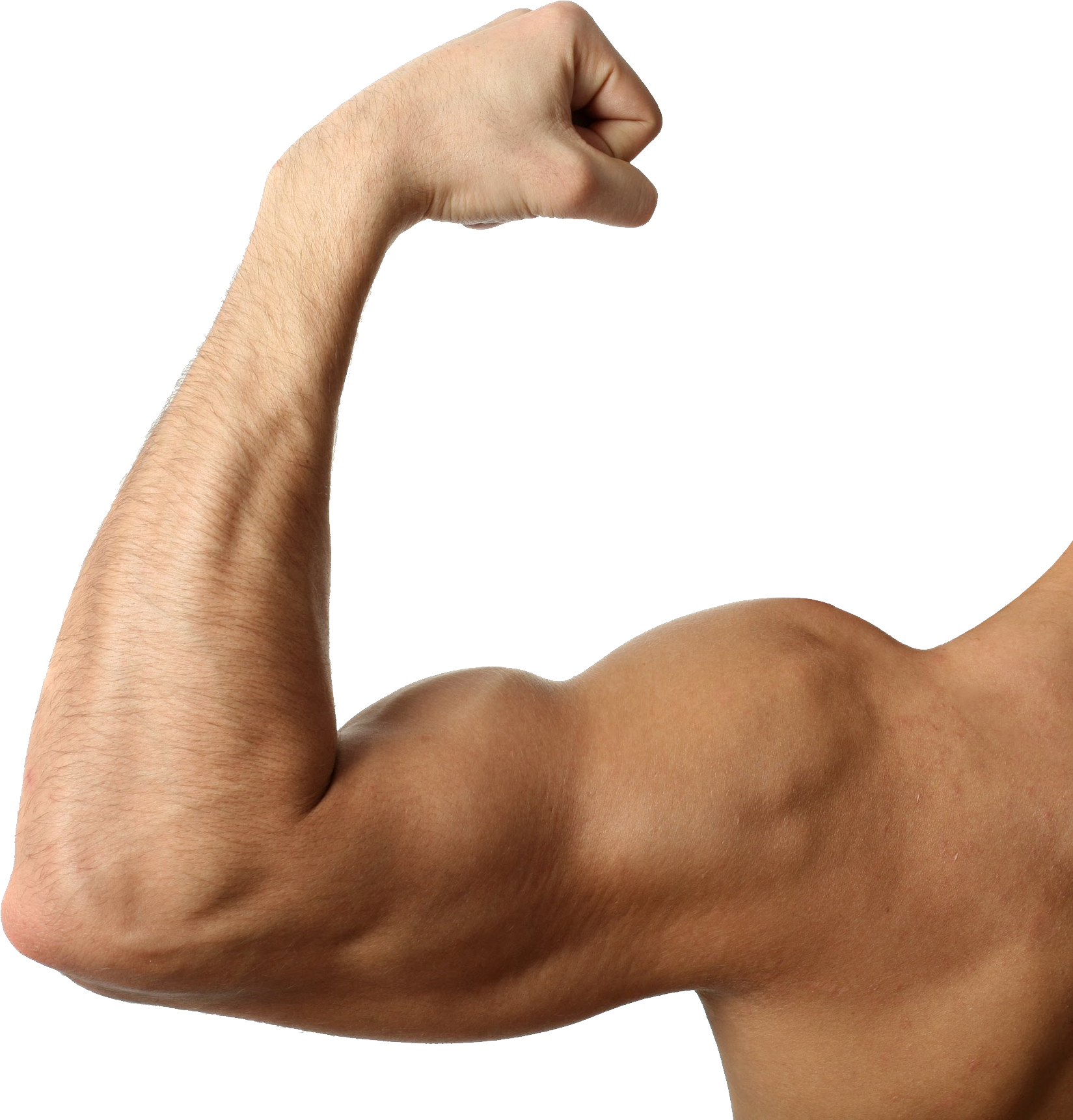 Transparent muscles hand. Muscle png images free