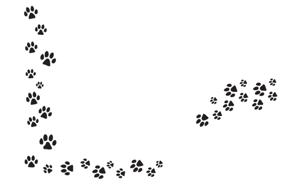 Transparent paw line. Series of prints png