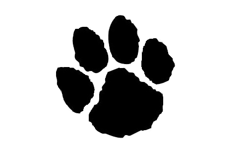 Transparent paw jaguar. Print image library