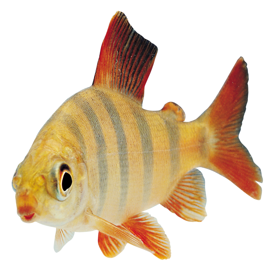 Transparent photographs fish. Png by absurdwordpreferred on