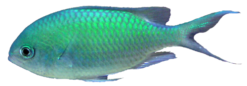 Transparent photographs fish. Ocean png mart